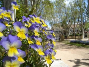 flores parque