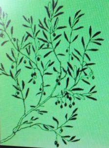 fiesta olivo 1